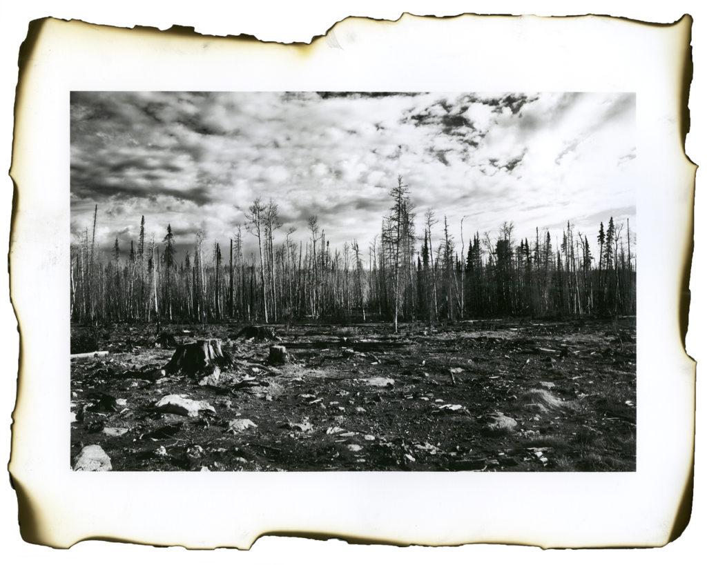 Two Years After the Brian Head Fire (1) - Kristen Bennett, inkjet print