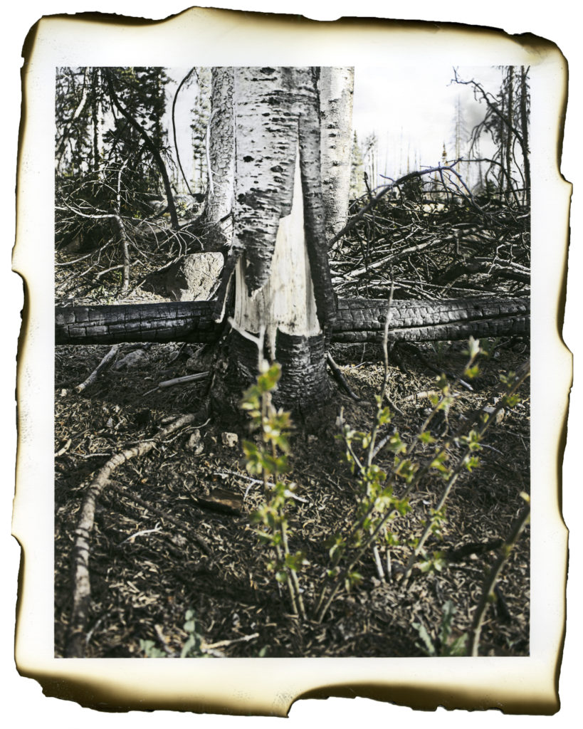 Two Years After the Brian Head Fire (2) - Kristen Bennett, inkjet print