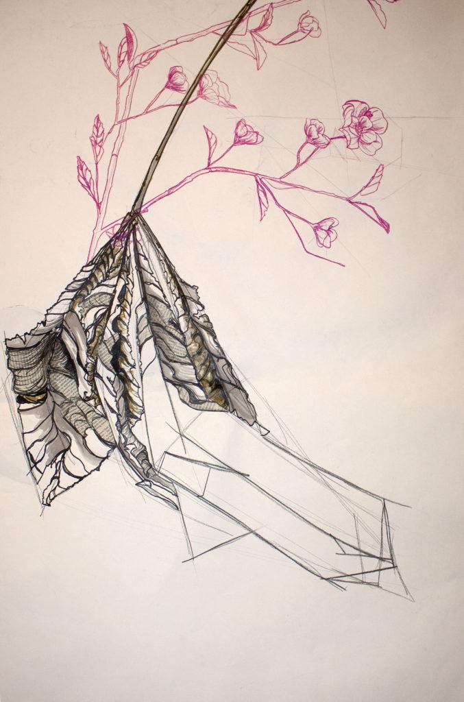 Reborn - Janell Heck, conte, ink, prismacolor