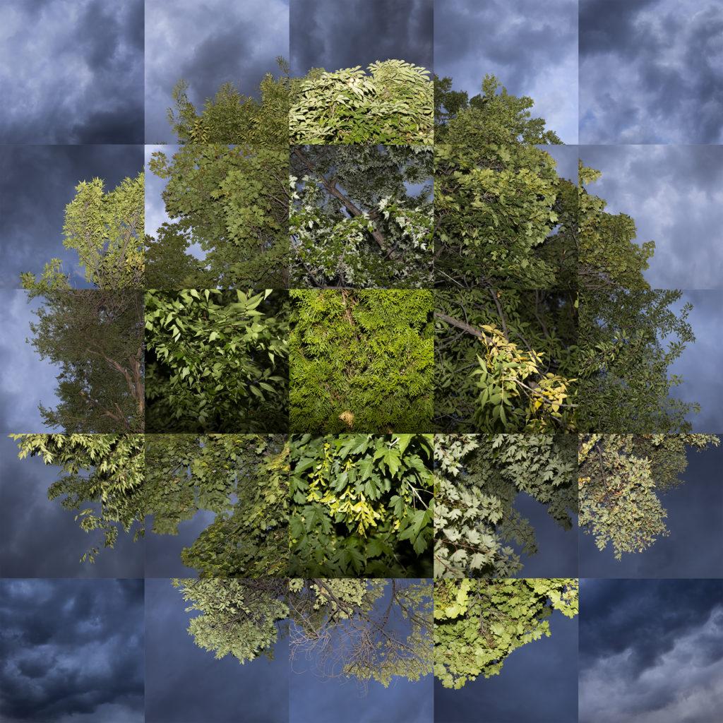Tree Study (ii) - Will Betts, digital photograph