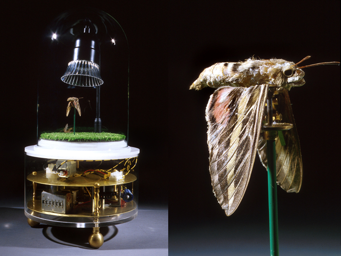 Lost in the New Landscape; Paul Stout, plastic casing with glass top enclosing a moth, light, and brass, steel and aluminum parts, 18 x 12