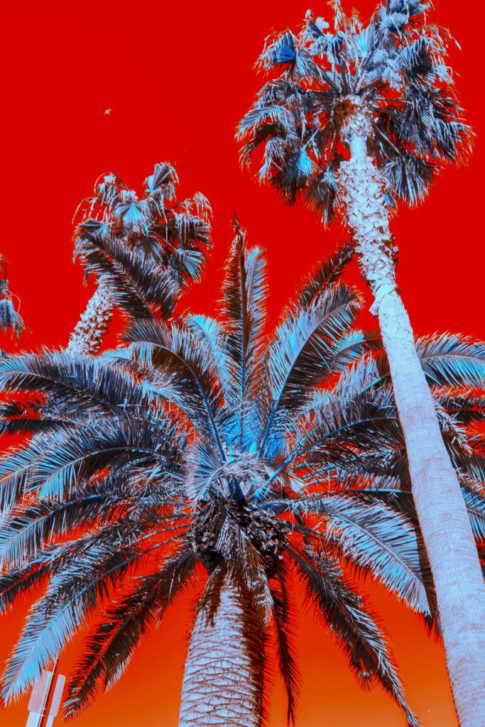 Downtown Santa Monica, California - Natalie Hopes