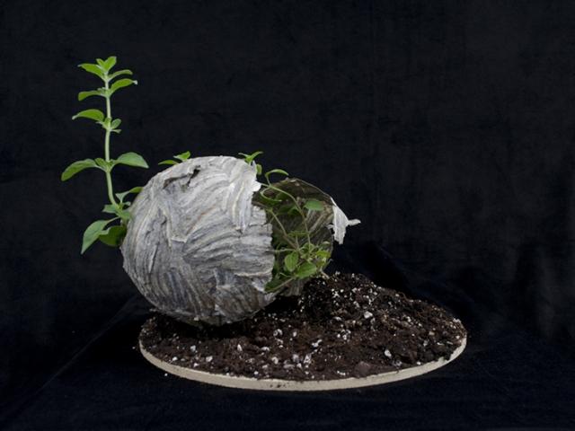 Herbarium Obscura, Nancy Rivera