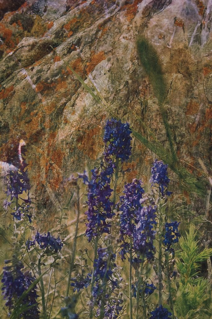 Open Sky: Taft-Nicholson Residency Exhibition, Gittins Gallery, September 2017; artwork: Hidden Amonst the Wildflowers (detail), Kayli Timmerman, digital collage