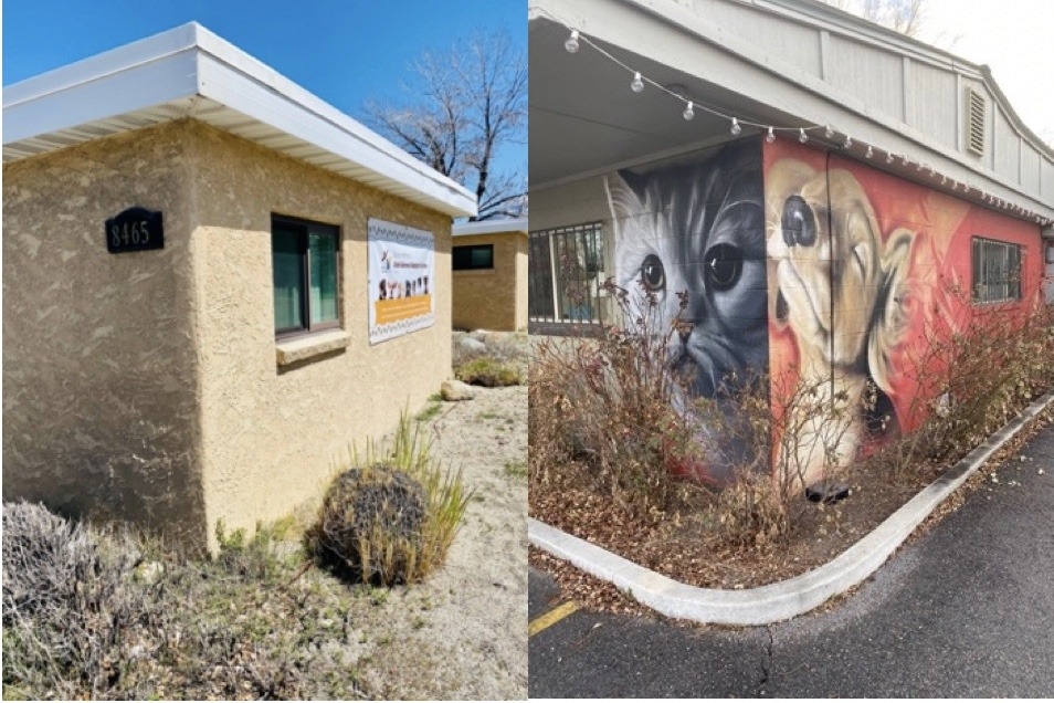 animal adoption mural call for submissions